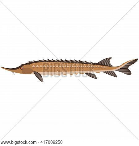 Vector Rare Kaluga Spike Fish Freshwater Species Illustration