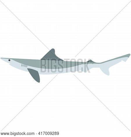 Atlantic Sharp Nose Shark Vector Illustration On White