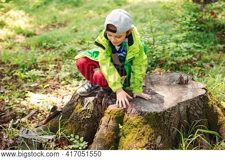 Happy Boy Playing On Wooden Stump During Stroll In The Forest. Summer Vacation, Family Time On Natur