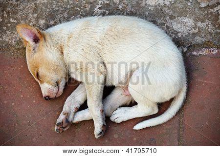 Street Homeless Mongrel Puppy