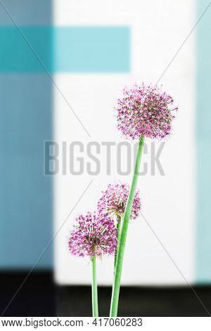 Abstract Vertical Background Photo With Wild Tall Pink Flowers Over Blurred Wall Background. Allium