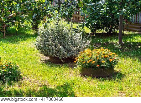 Home Garden With Ornamental Trees And Plants. Picturesque View Of A Beautiful Landscaped Garden With