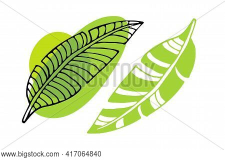 Tropical Leaves On White Background Clipart. Banana Leaves Icon Isolated. Hawaii Green Leaves. Botan