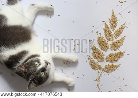 Cat With A Spikelet From Grains. Oat Grains.