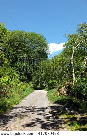 A View Of A Narrow Country Lane Surrounded By Woodland Trees, Bushes And Grass In Bright Summer Suns