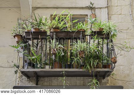 Balcony With Indoor Plants In Flower Pots. Gardening At Home, Peaceful Hobby For Botany Lovers. Vall