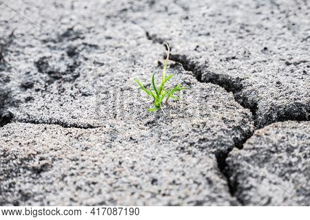 Macro Shot Of Earliest Braird On Eroded Land. Ecology Concept. Rising Sprout On Dry Ground. Green Pl
