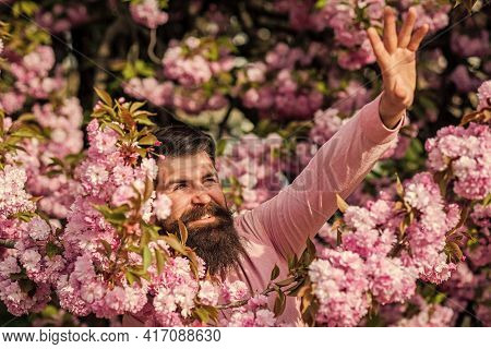 Hide From The Sun. Park With Tourist Man Reaching Sakura Flowers Under Cherry Blossom Tree. Happy Ea