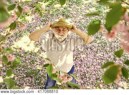 Positive Emotions. Happy Old Age. Cheerful Pensioner. Mental Health. Happy Man Under Sakura Tree Loo