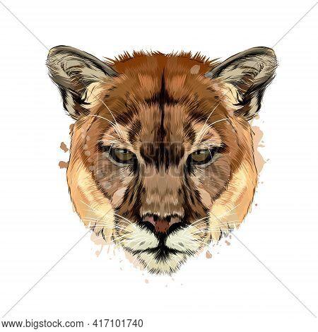 Puma, Cougar Head Portrait From A Splash Of Watercolor, Colored Drawing, Realistic. Vector Illustrat