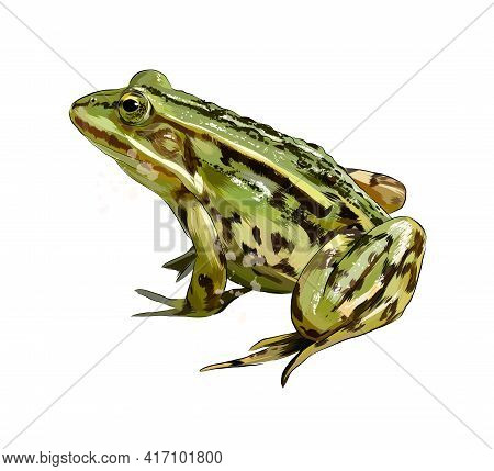Green Frog From A Splash Of Watercolor, Colored Drawing, Realistic. Vector Illustration Of Paints