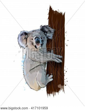 Koala From A Splash Of Watercolor, Colored Drawing, Realistic. Vector Illustration Of Paints