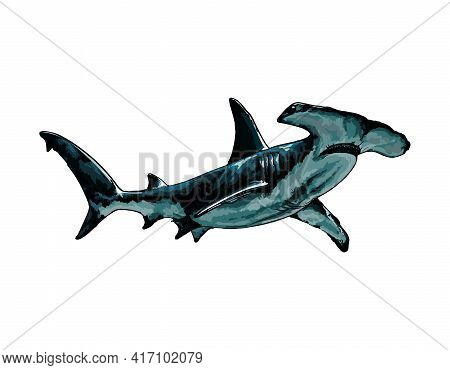 Hammerhead Shark From A Splash Of Watercolor, Colored Drawing, Realistic. Vector Illustration Of Pai