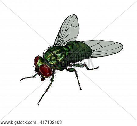 Housefly From A Splash Of Watercolor, Colored Drawing, Realistic. Vector Illustration Of Paints