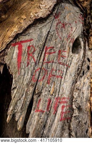 Tree Of Life Graffiti Close Up Along Blue Ridge Parkway