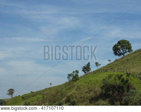 Sloping Hill. Trees On A Hill. Nature Beauty.
