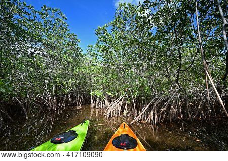 Afternoon Kayaking On Nine Mile Pond In Everglades National Park, Florida.