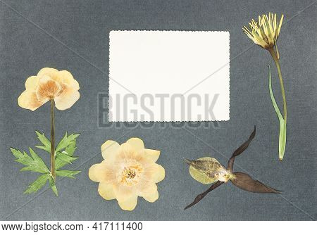 Page From An Old Photo Album. Flowers Trollius. Scrapbooking Element Decorated With Leaves, Flowers