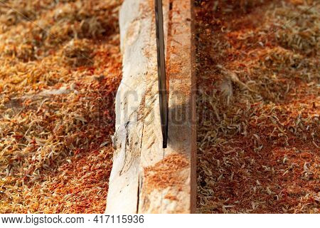 Chainsaw Close-up Of Woodcutter Sawing Chain Saw In Motion,