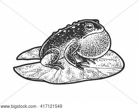 Puffy Inflated Toad Frog On A Water Lily Leaf Sketch Engraving Vector Illustration. T-shirt Apparel