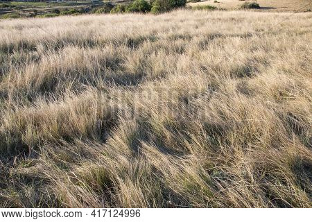 Soft Dry Winter Grass In Shades Of White