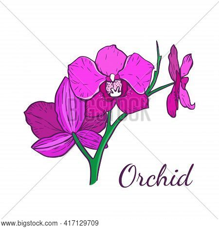 Three Flowers Of The Phalaenopsis Orchid Of Magenta Color. Plants. Vector Illustration