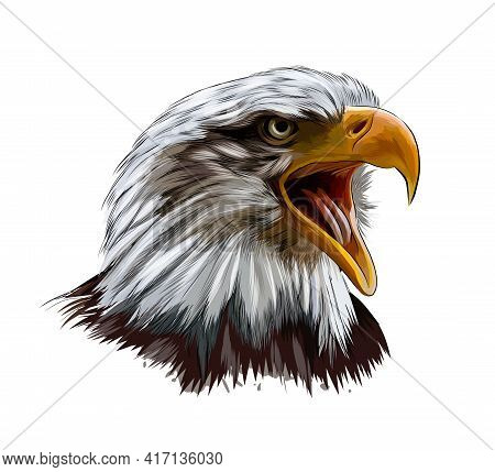 Bald Eagle Head Portrait From A Splash Of Watercolor, Colored Drawing, Realistic. Vector Illustratio