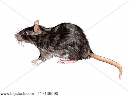 Rat, Mouse From A Splash Of Watercolor, Colored Drawing, Realistic. Vector Illustration Of Paints