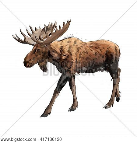 Moose From A Splash Of Watercolor, Colored Drawing, Realistic. Vector Illustration Of Paints