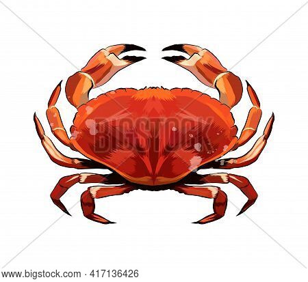 Red Crab From A Splash Of Watercolor, Colored Drawing, Realistic. Vector Illustration Of Paints