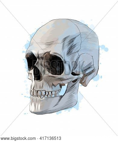 Human Skull From A Splash Of Watercolor, Colored Drawing, Realistic. Vector Illustration Of Paints