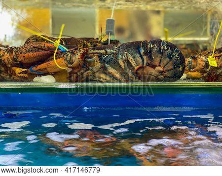 Big Alive Lobsters For Sale At Seafood Market