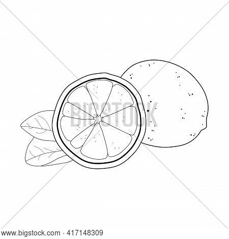 illustration vector of lemon line icon. lemon sketch. lemon fruit. suitable for coloring book