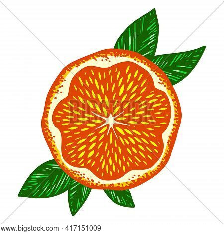 Bright Fluorescent Orange In The Section Framed By Green Leaves. Vector Illustration Isolated On A W