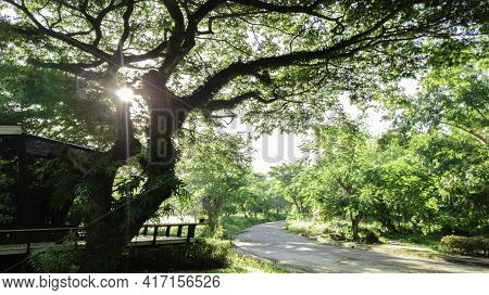 Beautiful Bottom View Of Green Tree With Blue Sky Background, Dark Forest With Flare Light, Beautifu
