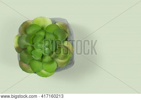 Artificial Ornament Plant Pot For Table, Seen From Above, With Space For Text