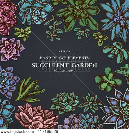 Floral Design On Dark Background With Succulent Echeveria, Succulent Echeveria, Succulent Stock Illu