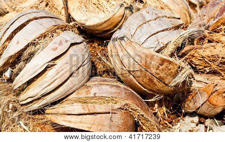 The Pile Of Coconut Shells
