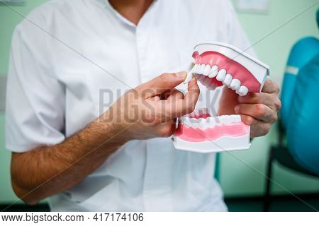 Positive Doctor In White Uniform Showing Mock Jaw With Teeth While Sitting In Dental Office