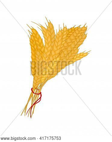 Bunch Of Wheat. Reap Of Spiked Grain Heads. Sheaf Of Crop Ears. Vector
