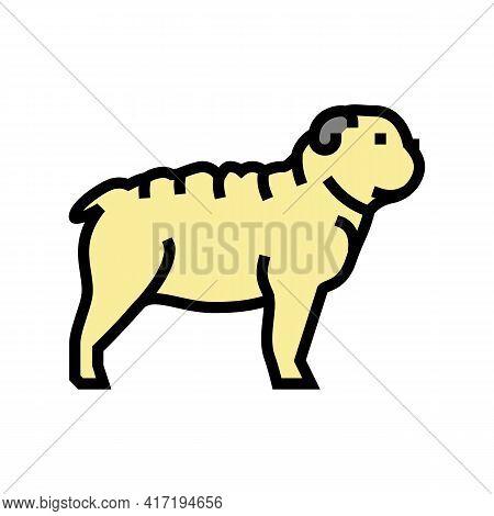 Bulldog Dog Color Icon Vector. Bulldog Dog Sign. Isolated Symbol Illustration
