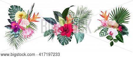 Exotic Tropical Flowers, Orchid, Strelitzia, Hibiscus, Protea, Anthurium, Palm