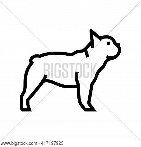 French Bulldog Dog Line Icon Vector. French Bulldog Dog Sign. Isolated Contour Symbol Black Illustra