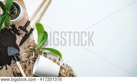 Phalaenopsis Orchid Transplant Home, Seasonal Home Garden Care, Top View, Flat Lay, Copy Space.mini