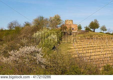Spring vineyard near Lampelberk, Znojmo region, Southern Moravia, Czech Republic