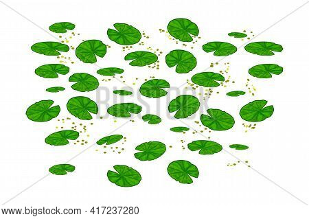 Lily Pads Isolated On White Background. Lotus Leaf Pattern. Water Lilies Leaves. Pond Texture With N