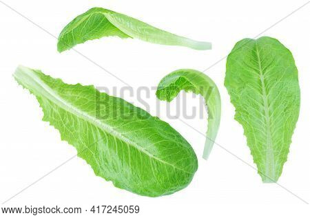 Fresh Green Romaine Lettuce Leaves Isolated On The White Background. Lettuce Salat Pattern. Top View