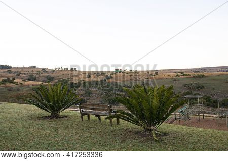 Two Cycads Growing In Garden With Grassland Behind
