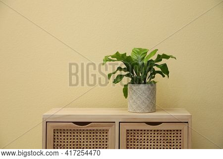 Beautiful Fresh Potted Fern On Wooden Cabinet Near Beige Wall. Space For Text