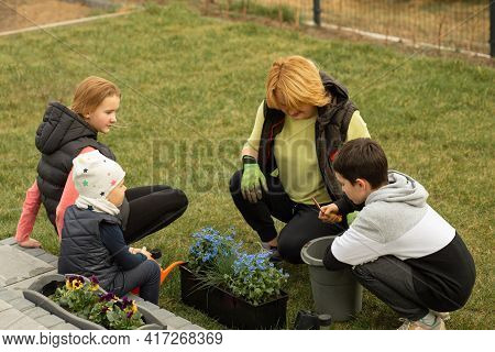 Mother With Many Children Plants Flowers In Pots In Front Or Back Yard Of House. Happy Together